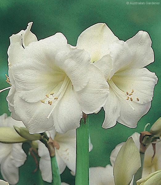 Домашние цветы уход фотографии