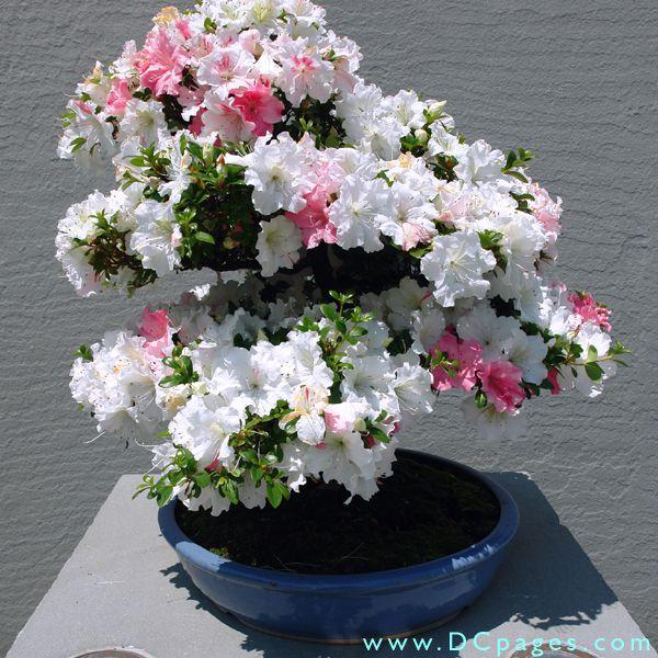 Комнатные красивые цветы фото